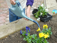 Watering with sight loss