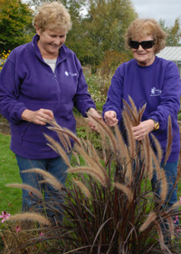 Plant grasses for sound and touch