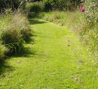 Paths mown through a lawn