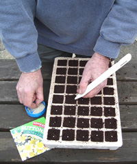 Planting in a tray with cells