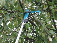 Heavy duty branch pruner with three-fold transmission