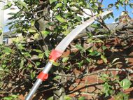 Tree pruning systems and saws