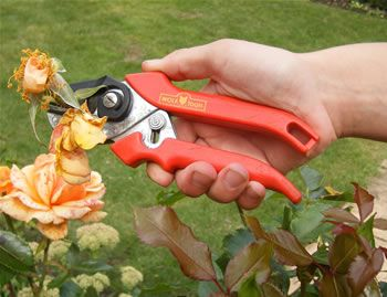 Cut and hold secateurs